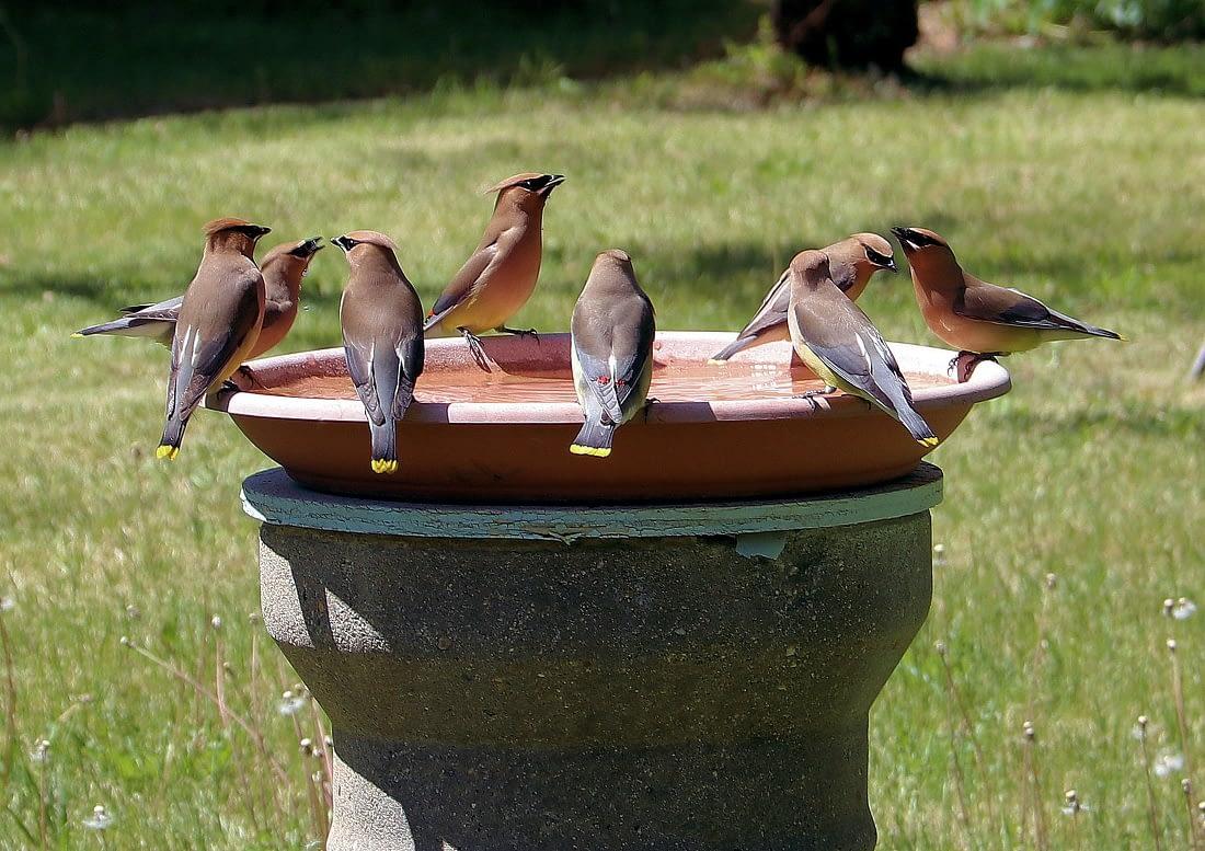 Bird Bath Heater Reviews