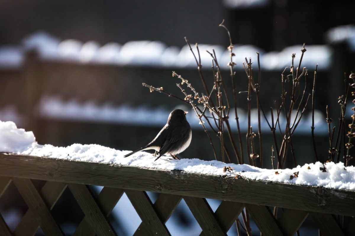 Why You Shouldn't Buy A Solar Birdbath Heater