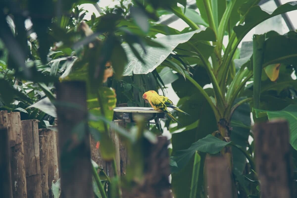 Why A Hanging Birdbath Is A Smart Choice