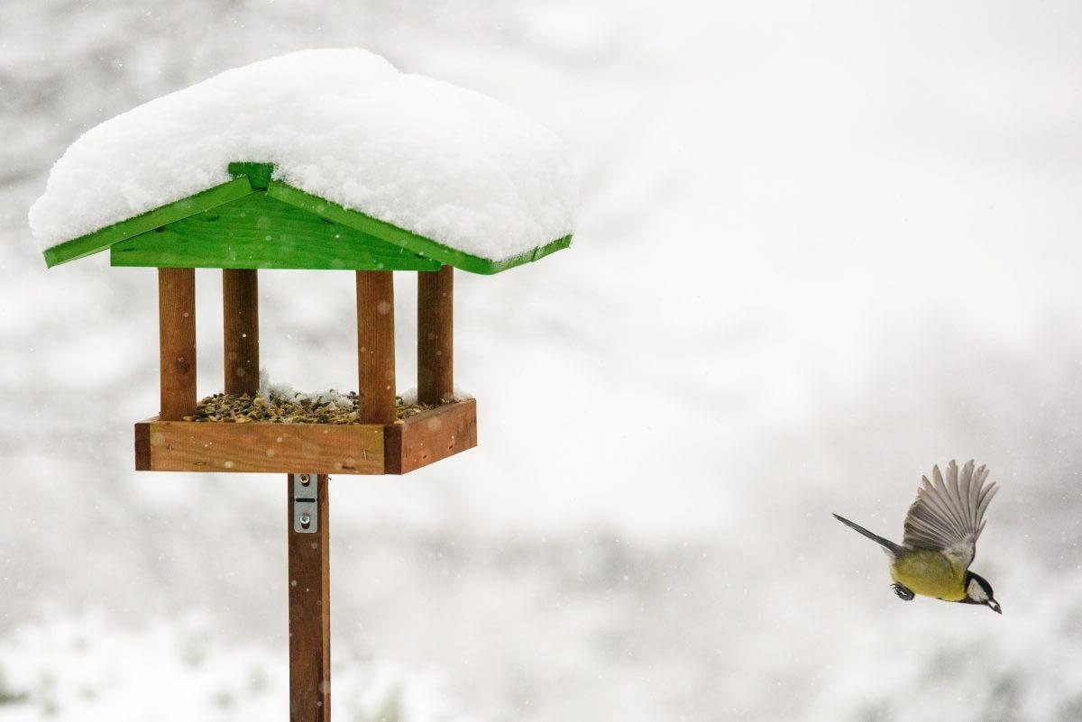 Heated Bird Bath – The Best Heated Bird Baths For Your Yard