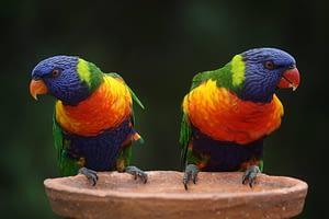 bird bath reviews