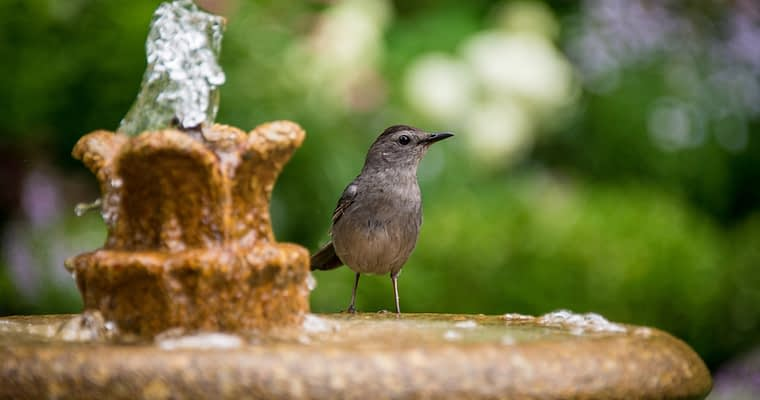 Reviews Of Cement Bird Baths For Sale On Amazon