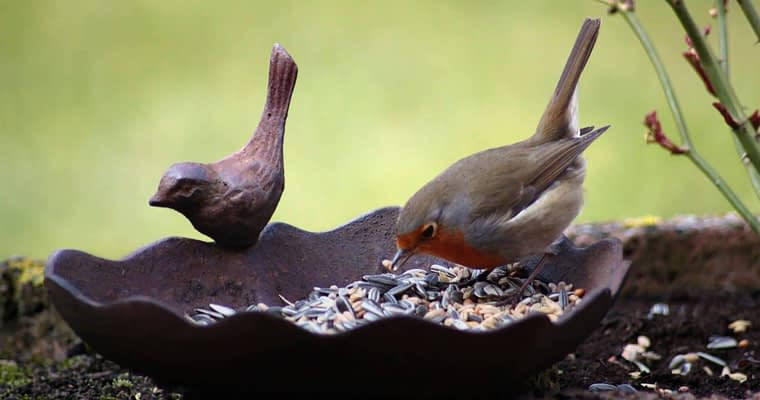 Cool Bird Baths on Amazon