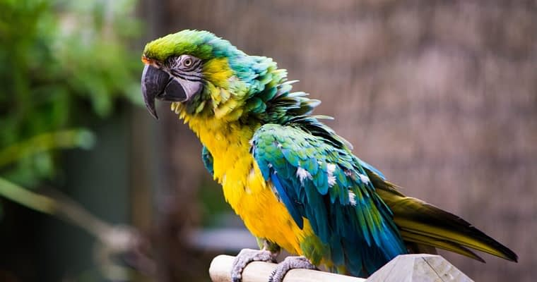 The Truth About Outdoor Parrot Aviaries