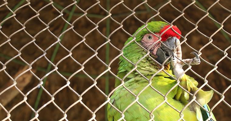 Buy Or Build An Indoor Outdoor Bird Aviary (Updated 2021)