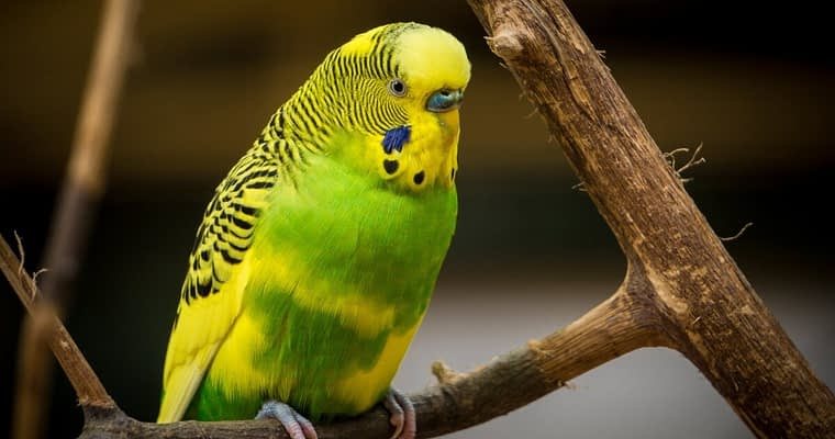 Buy The Best Parakeet Cage