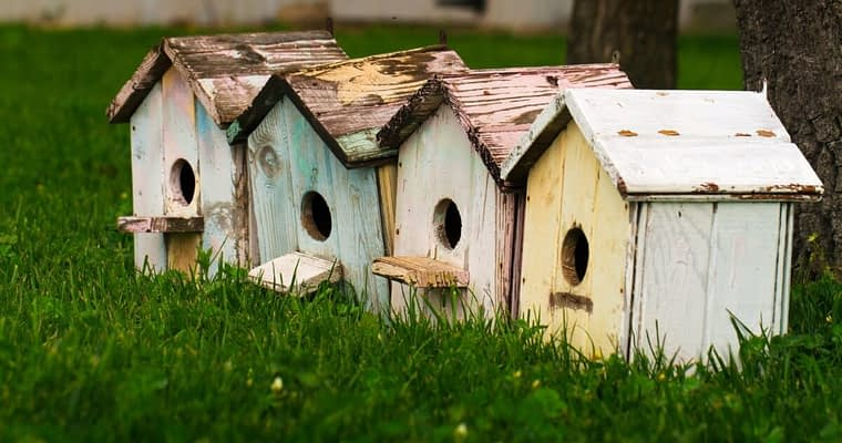 A Guide To The Best Bird House