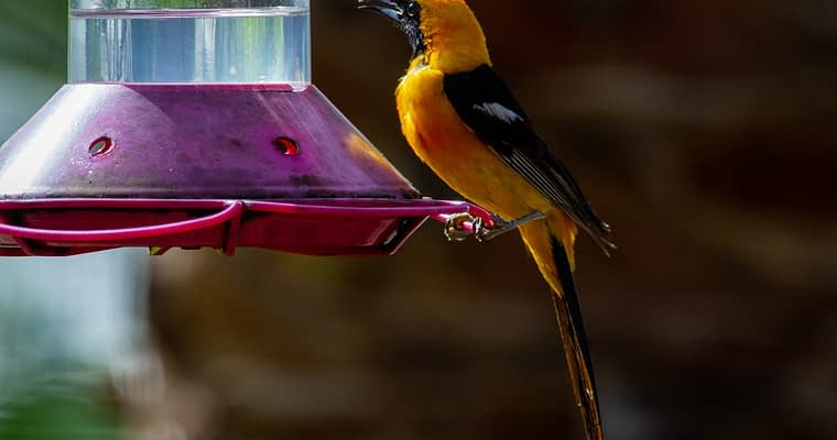 Tips To Help You Choose The Best Oriole Bird Feeder