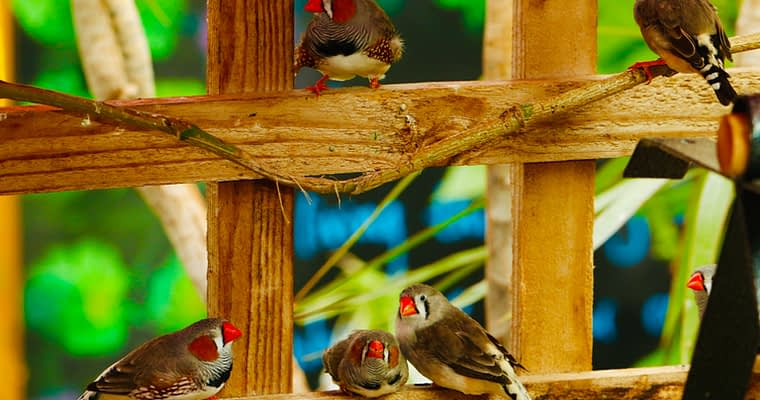How To Build A Finch Aviary