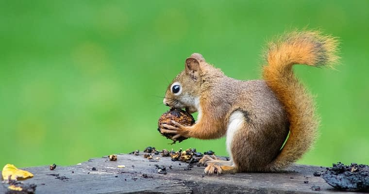 Squirrel Proof Bird Feeder – Never Worry About Squirrels Again