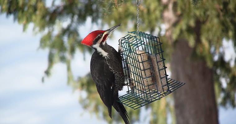 Feeding Wild Birds In Your Garden