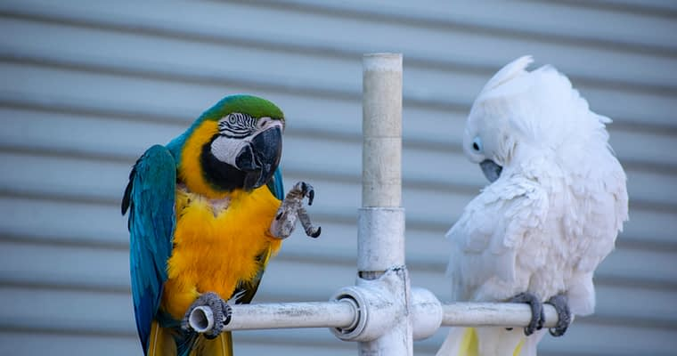 The Best Quality Parrot Cages