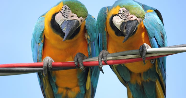 What Do Parrots Eat And Drink?