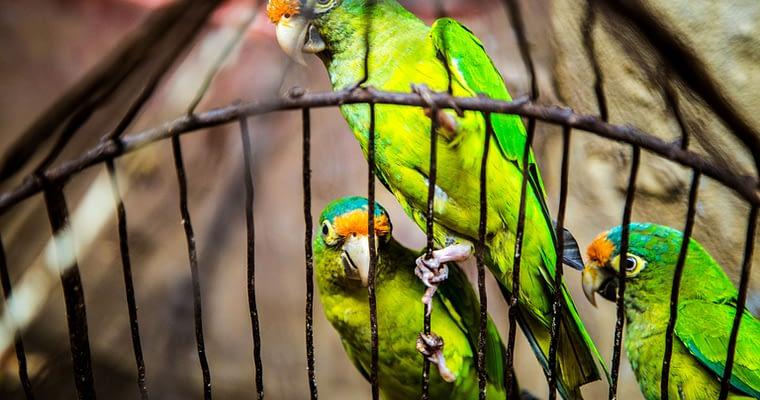 How To Make Aviary Panels