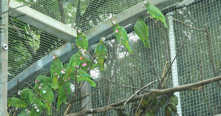 Outdoor Bird Aviary [Learn The Secrets Of The Best Aviary]