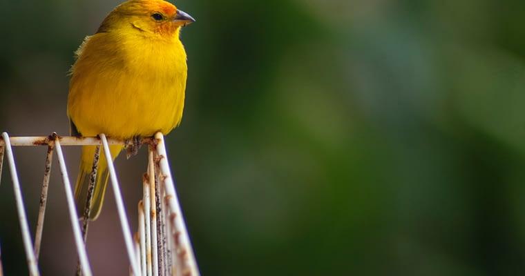 Pet Bird Supplies Information